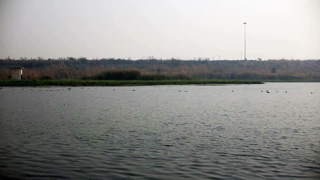 vögel im see - water bird stock-videos und b-roll-filmmaterial