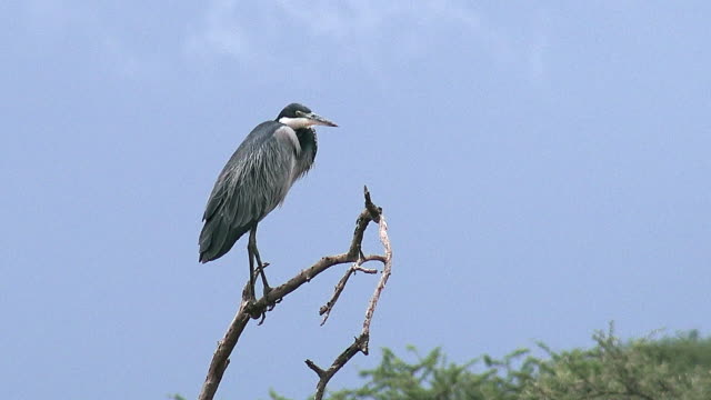 vídeos y material grabado en eventos de stock de birds in ndutu, tanzania - posición elevada