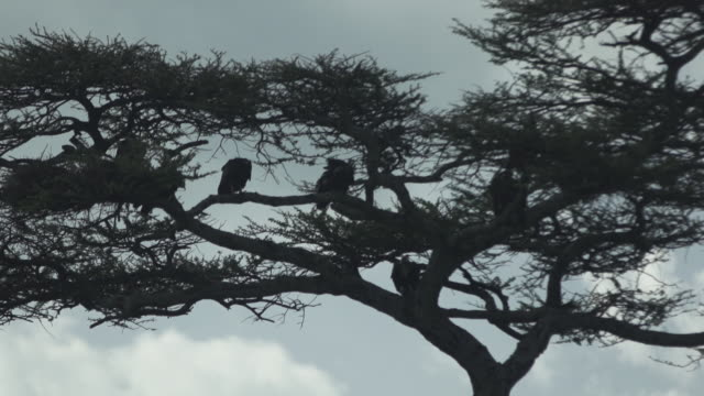 Birds In Silhouetted Trees