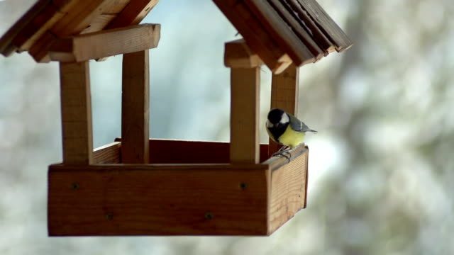 birds in slow motion - birdhouse stock videos & royalty-free footage