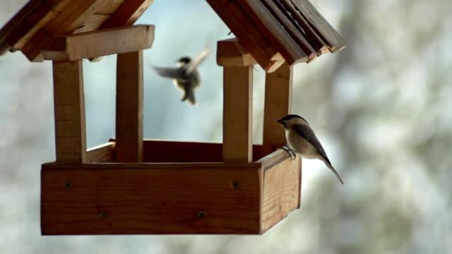 Birds in SLOW MOTION