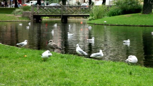 Birds in the park.