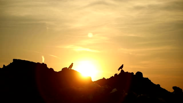 Birds in the sunset at the landfill