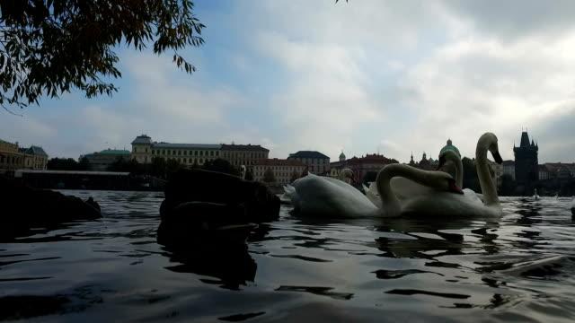 ヴルタヴァ川の鳥 - stare mesto点の映像素材/bロール