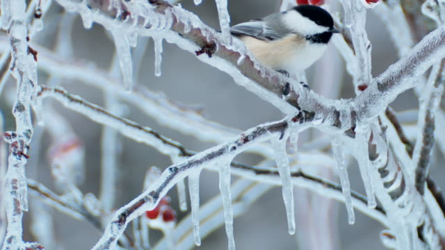 birds in winter on branches and feeder - twig stock videos and b-roll footage