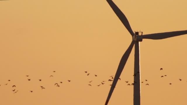 birds migration - bird stock videos & royalty-free footage