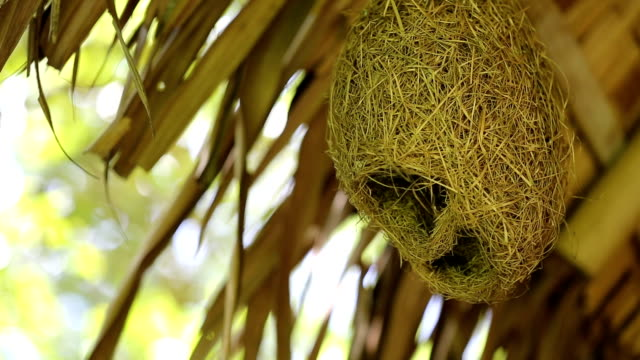 bird's nest hanging under the roof. - bird's nest stock videos & royalty-free footage