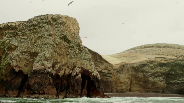 Birds of Ballestas Islands, Peru