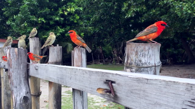 birds of curieuse island, seychelles - seychelles stock videos & royalty-free footage