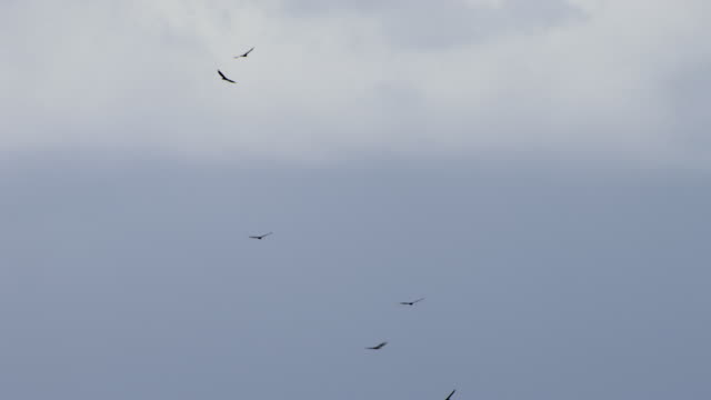 birds of prey soar through clouds in jamaica. - caribbean stock videos and b-roll footage