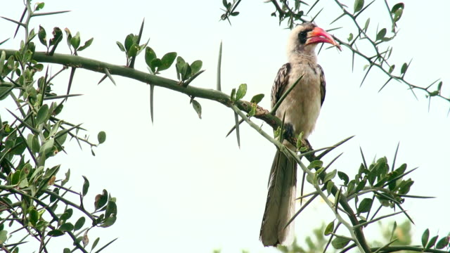 Birds of Serengeti National Park, Tanzania