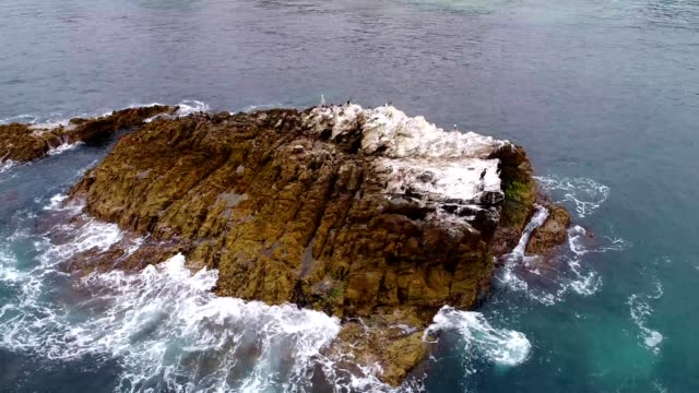 birds on a rock surrounded by ocean near laguna beach california - laguna beach california video stock e b–roll
