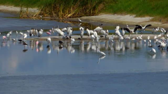 Birds on a Sandbar
