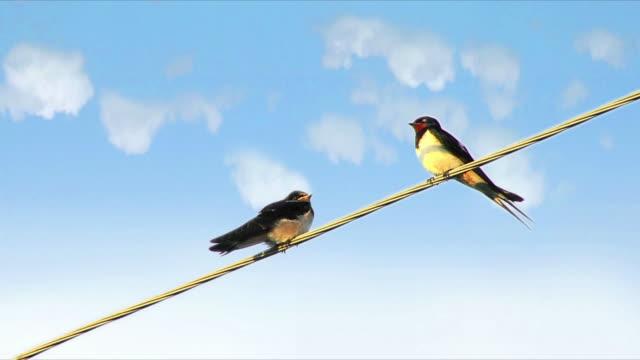 vidéos et rushes de oiseaux sur un fil de fer - two animals