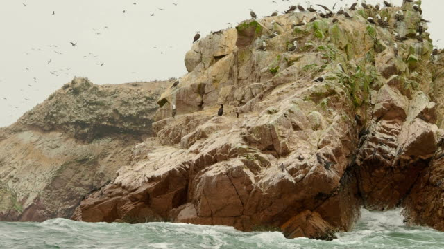 birds on ballestas islands, paracas national reserve, peru - nature reserve stock videos & royalty-free footage
