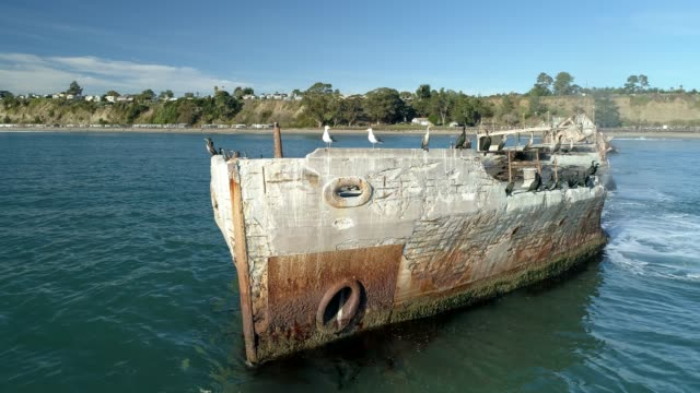 birds on concrete ship - santa cruz california stock videos and b-roll footage