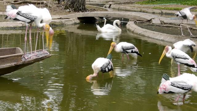 Birds on marsh