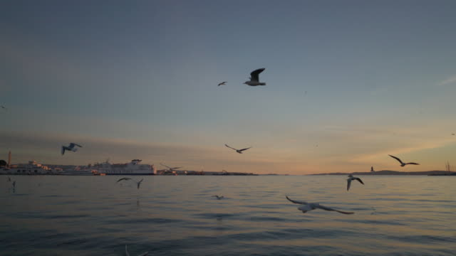 birds on split croatia harbor at dusk - mittelmeer stock-videos und b-roll-filmmaterial