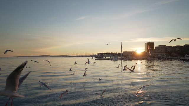 vídeos y material grabado en eventos de stock de birds on split croatia harbor at sunset - región de dalmacia croacia