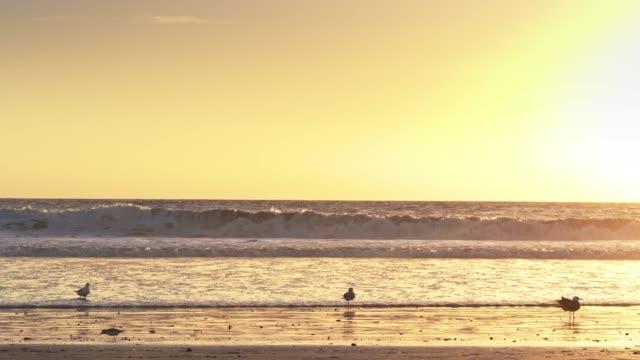 vídeos de stock, filmes e b-roll de pássaros na praia na hora dourada - areia