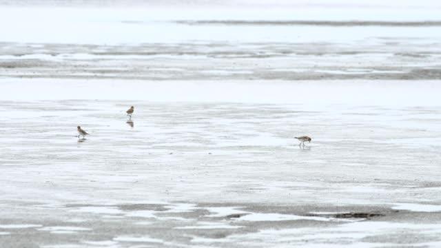 Natur Hintergrund.  Vögel am Strand.