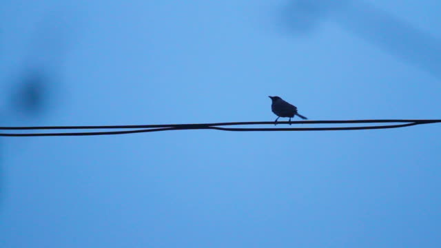 Birds on the electric wire after raining with blue sky background