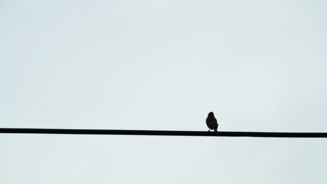 birds on the electric wire after raining with blue sky background - filo metallico video stock e b–roll