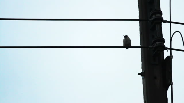 birds on the electric wire after raining with blue sky background - telephone line stock videos and b-roll footage