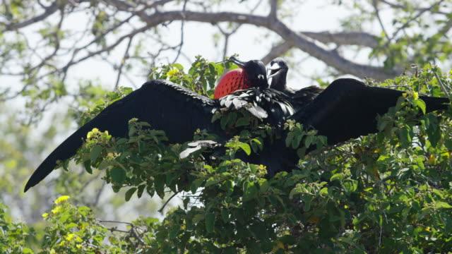 Birds on the Galapagos