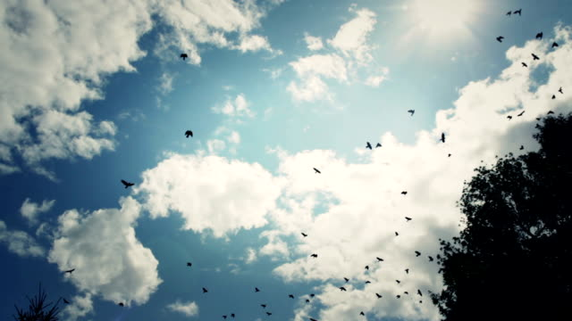 Birds on the sky