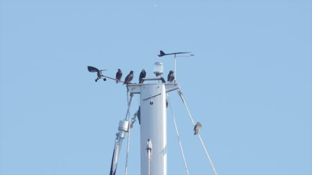 vídeos y material grabado en eventos de stock de birds on top of the boat mast and weather vain - cuatro animales
