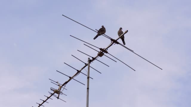 birds on tv antenna with blue sky - animal antenna stock videos & royalty-free footage