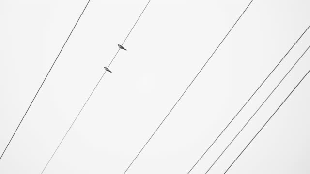 birds on wires - cable stock videos & royalty-free footage