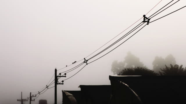 birds on wires - telegraph pole stock videos and b-roll footage