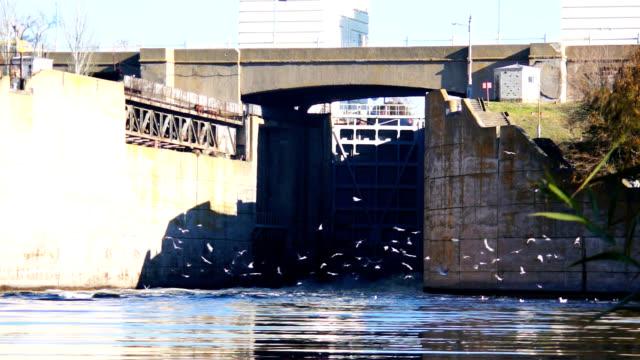 birds ovation on the floodgate - portello video stock e b–roll