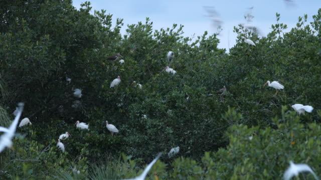 vídeos y material grabado en eventos de stock de birds pelican flying to tree home at twilight - posición elevada