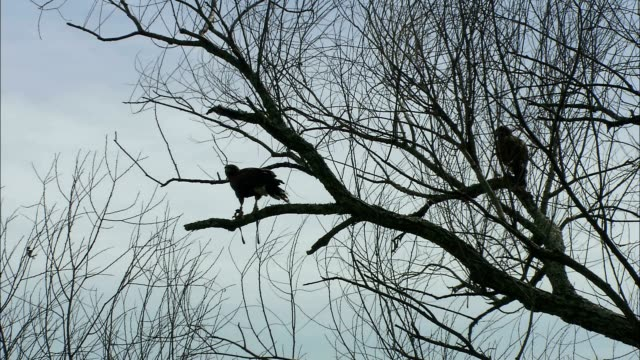 birds perch in a bare tree. - bare tree stock-videos und b-roll-filmmaterial