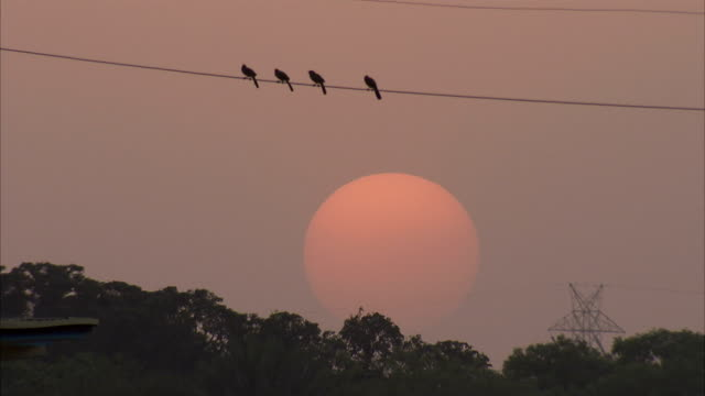 birds perch on a wire at sunset. - electricity pylon stock videos & royalty-free footage