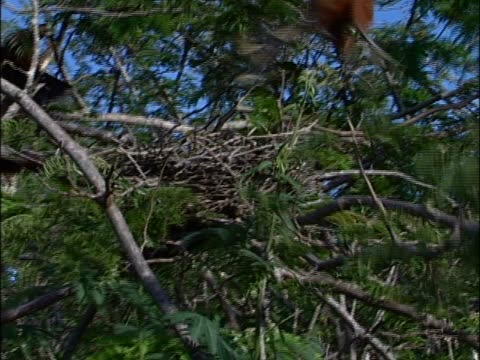 birds perching near a nest - vier tiere stock-videos und b-roll-filmmaterial