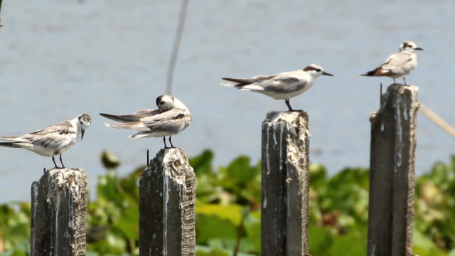 birds perching on wood posts - perching stock videos & royalty-free footage