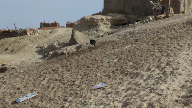 Birds picking up food in the sand in a very poor area in Tortuga Peru