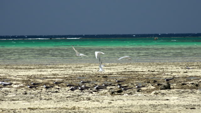 Birds relax in the coral sea beach in Seyal island