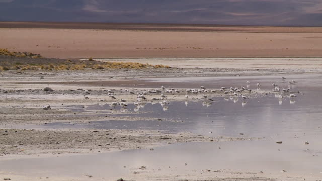 birds resting by a stream in a valley - bolivian andes stock videos & royalty-free footage