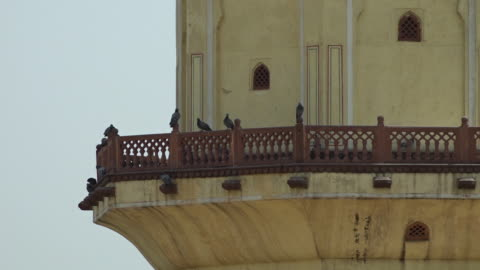 birds roosting on a balcony on a tower - perching stock videos & royalty-free footage