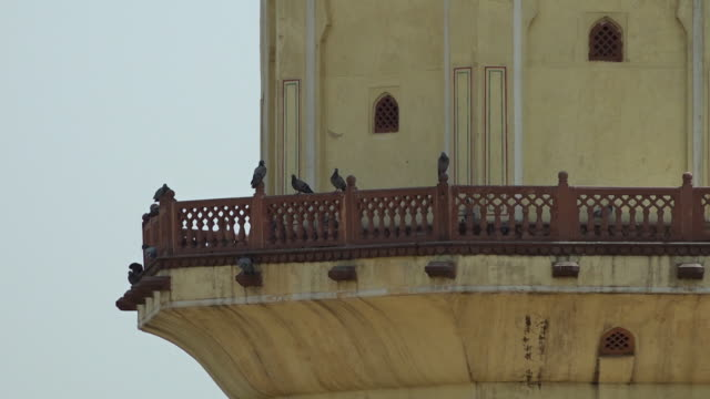 birds roosting on a balcony on a tower - appollaiarsi video stock e b–roll