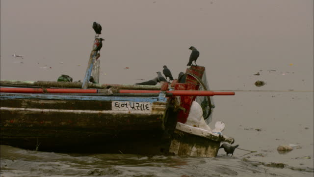 birds sit on an old boat on the shore of a river in india. - gabbiano video stock e b–roll