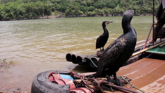 ms birds sitting at edge of traditional boat / close to li river, guangxi, china - li river stock videos & royalty-free footage