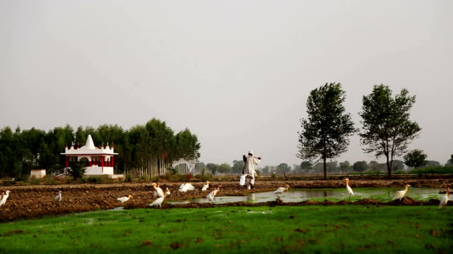 vidéos et rushes de oiseaux, assis sur le terrain pendant le lever du soleil - canard oiseau aquatique