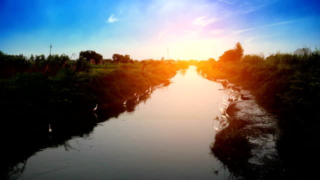 vídeos y material grabado en eventos de stock de pájaros en el río durante salida del sol - boca de animal