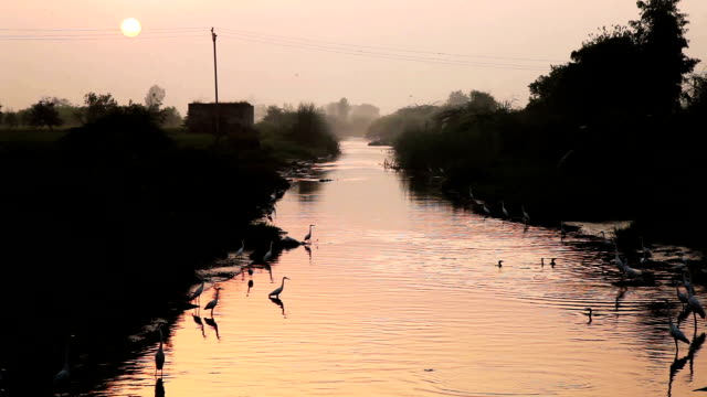 birds sitting in the river during sunrise - river stock videos & royalty-free footage